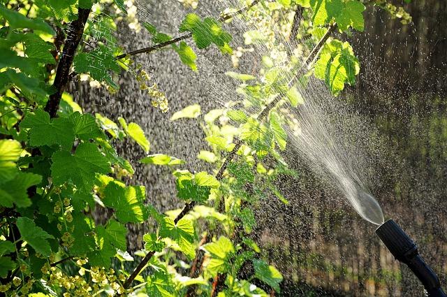 Az őszi lemosó permetezés jelentősége